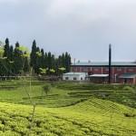 Mist Valley Tea Garden